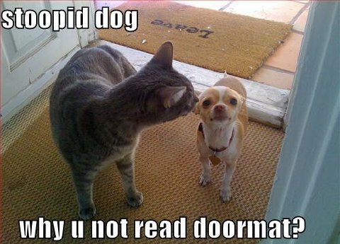 Funny Cat Dog Pictures Captions