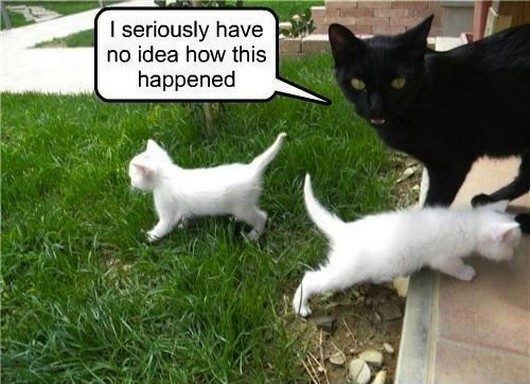 Image result for pics funny cats