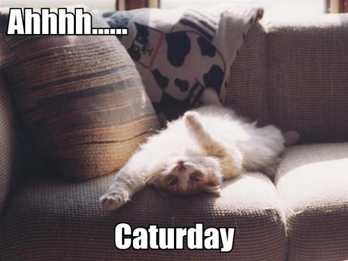 ahhhh-caturday