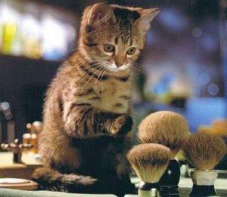 brushcat