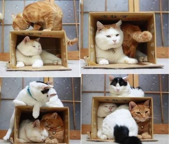 cats&boxes