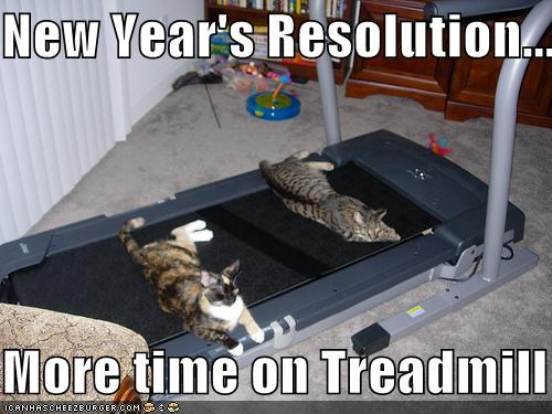 funny cat new year