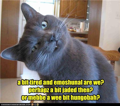 Questions Funny Cat Funny Pictures Cat Asks