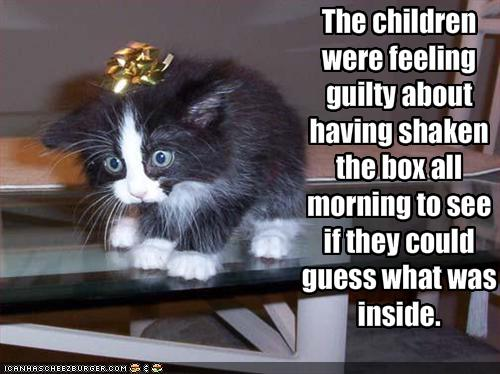 funny-pictures-gift-kitten-was-shaken