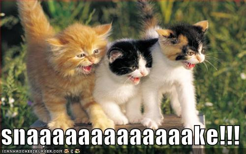 funny-pictures-kittens-see-snake