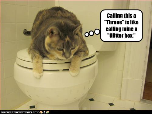 funny-pictures-cat-insults-your-toilet