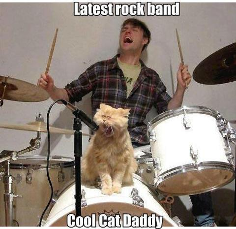 funnycatband