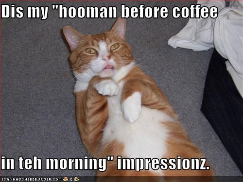 funnycatpre-coffee-hooman-impersonation