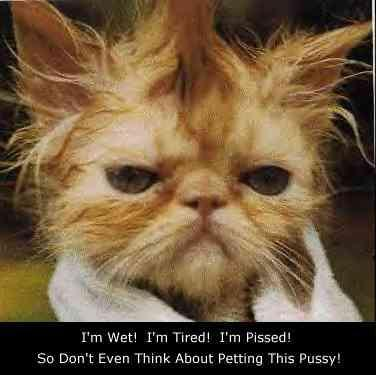 funnycats1wet_cat
