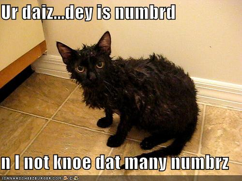funnycats2wet-cat