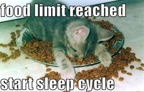 funnycatsleepcycle