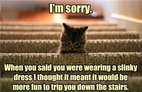 funnycatslinky