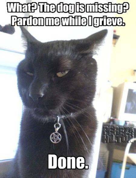 lol-cat-picture-bravo-show__oPt