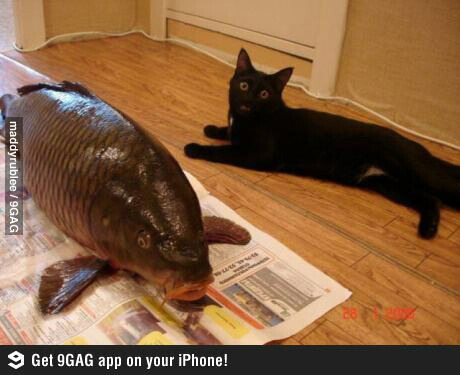 funnycatbigfish