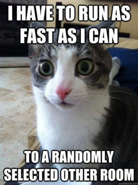 funnycatcat-logic