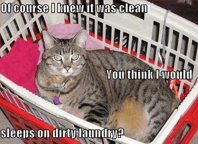 funnycatcleanlaundry