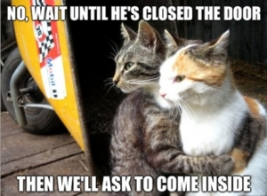 funnycatcloseddoorcat