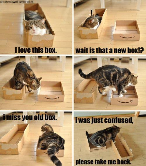 funnycat+logic_99ac4e_3958069