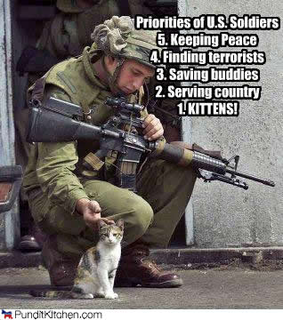 funnycatpriorities-kittens