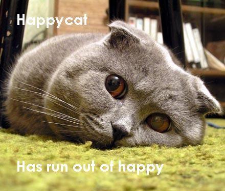 funnycatshappy_cat_sad