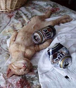 beer-cat-1