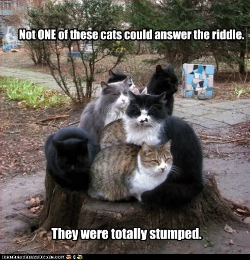 funny-cat-pictures-not-one-of-these-cats-could-answer-the-riddle
