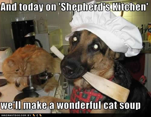 funny-dog-pictures-shepherds-kitchen