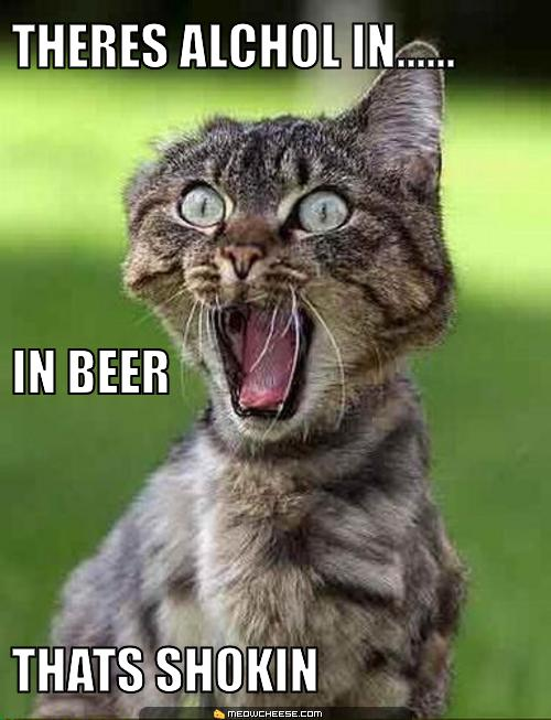 funnycattheres-alchol-in-in-beer-thats-shokin
