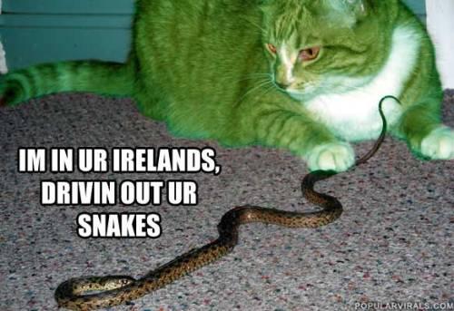 happy-st-patricks-day-983-cat-snake