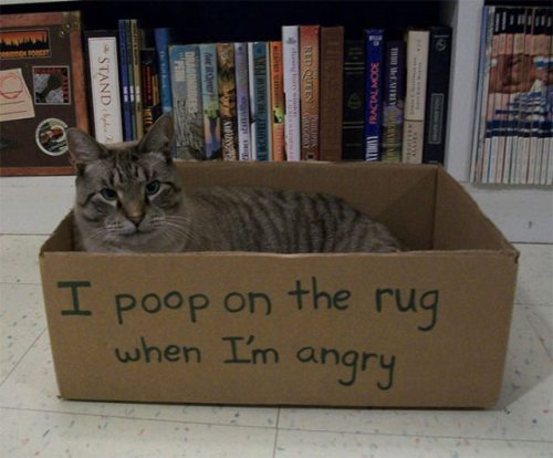 funny-cat-shaming-13