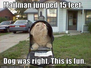 funnycat in mailbox