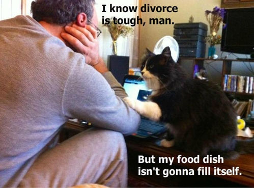 funnycatdivorce