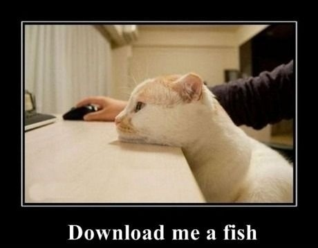 funnycatdownloadfish