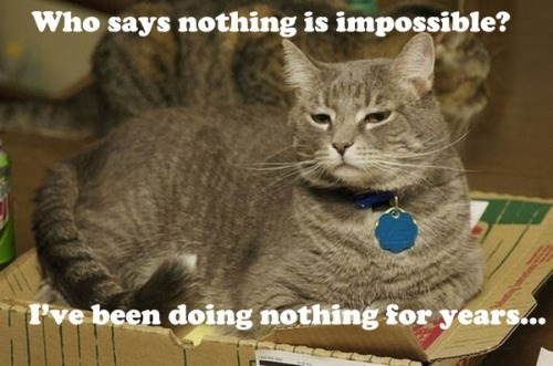 funnycatnothingimpossible