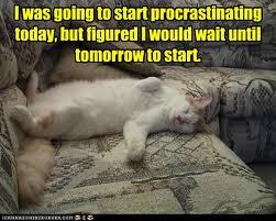 funnycatprocrastinating
