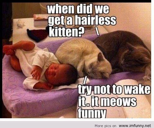 hairlesskitten