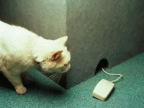 Mouse-hole-1280-960