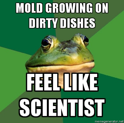afoul bachelor frog dirty dishes