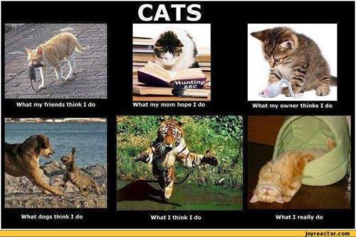 cats...do