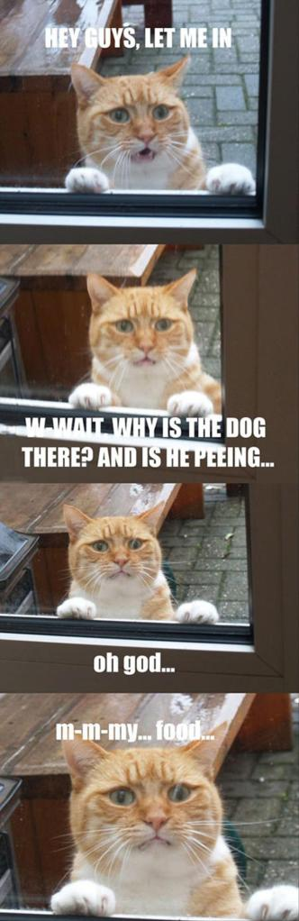dog-is-peeing-on-the-cat-food-funny-cat-pictures1