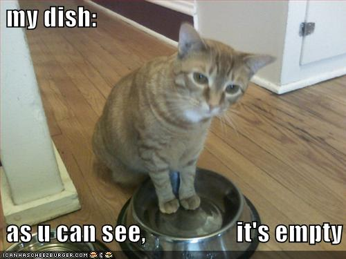 funny-pictures-cat-wants-food
