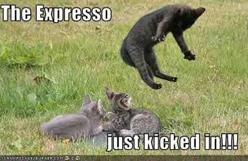 funnycatkittycoffee