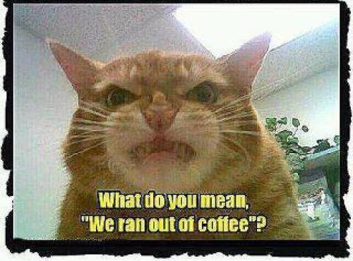 funnycatranoutofcoffee