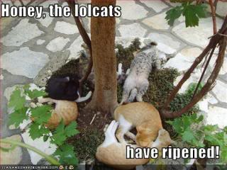 funnycats-have-ripened