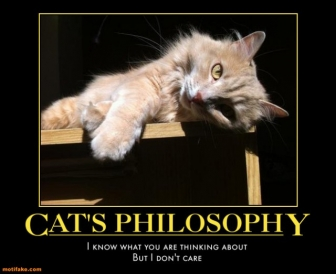 funnycats-philosophy-cats-philosophy-care