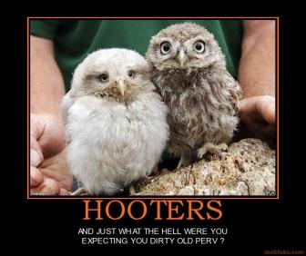 hooters-hooters-owls