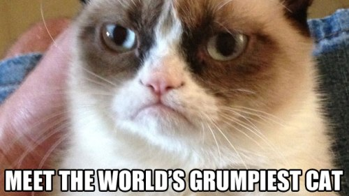 meet-grumpy-cat-header