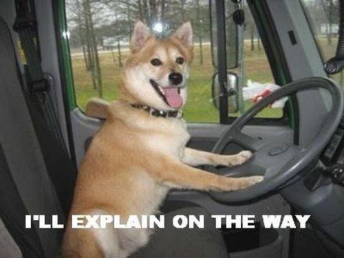 car-humor-joke-funny-No-time-to-explain-9