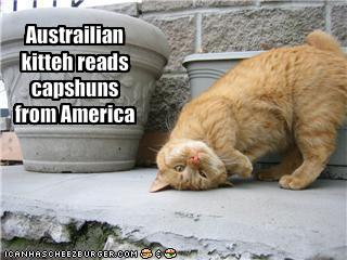 funny-australian-cat-reads-american-captions