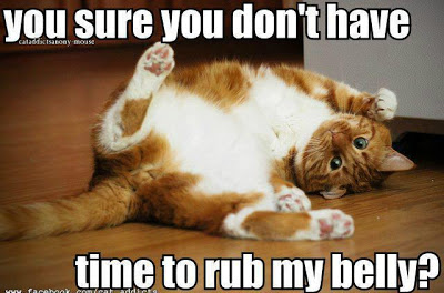 funnycatbelly rub
